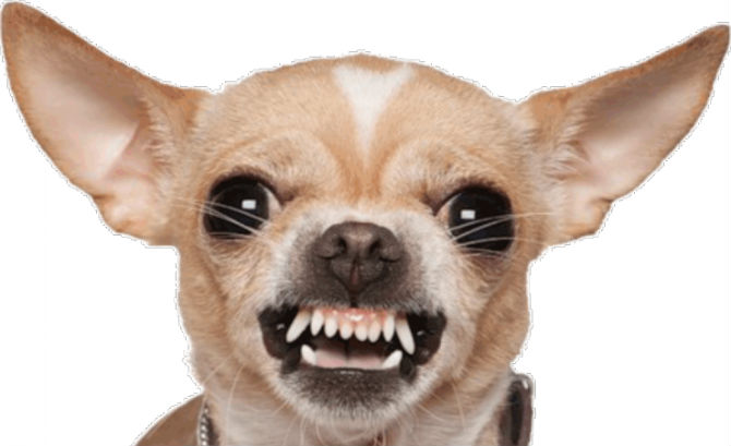 Name:  Chihuahua-Vs.-Great-Dane-Is-Like-A-Doggy-David-And-Goliath-Video.jpg Views: 27 Size:  38.2 KB